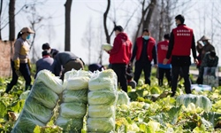 Vegetable planting cooperatives in Hunan provide vegetables for Hubei amid epidemic
