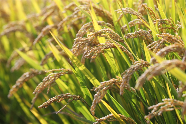 China vows to further ensure grain security