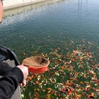 Pet fish economy developed to boost locals' income in China's Henan